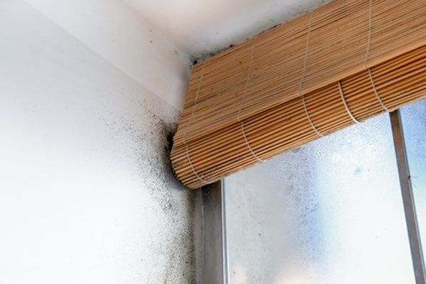 Common Place for Mould